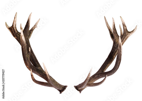Deer Antlers isolated on white Wallpaper Mural