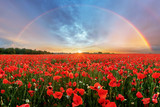 Fototapeta Rainbow - Rainbow Landscape over poppy field