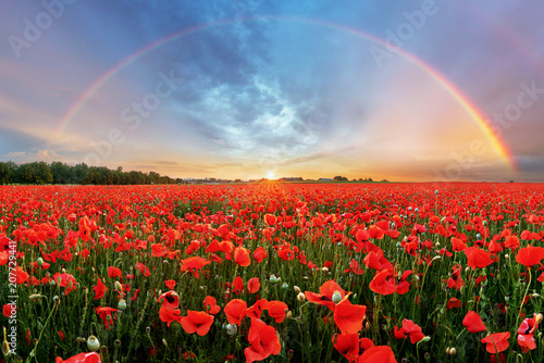 Foto op Canvas Poppy Rainbow Landscape over poppy field