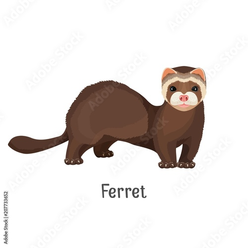 Obraz na plátne Ferret domesticated form of European polecat vector