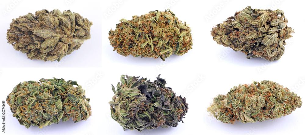 Fototapety, obrazy: Cannabis e marijuana con alto cbd e basso thc - fiore - droga leggera da fumare - sostanze legali e illegali - erba curativa - ganja