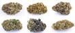 canvas print picture - Cannabis e marijuana con alto cbd e basso thc - fiore - droga leggera da fumare - sostanze legali e illegali - erba curativa - ganja