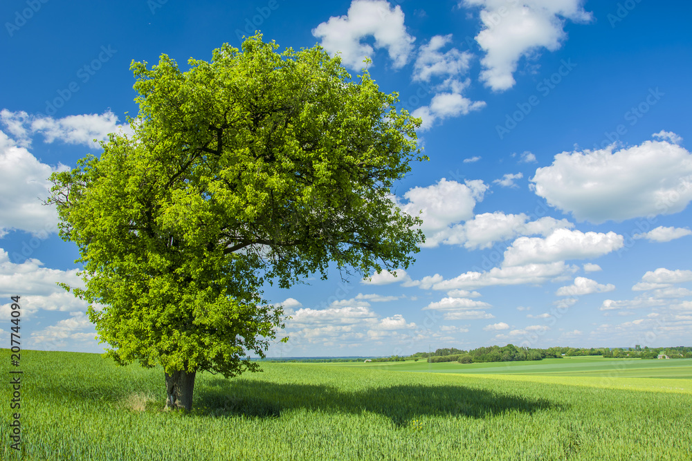 Shade under a large tree in the field