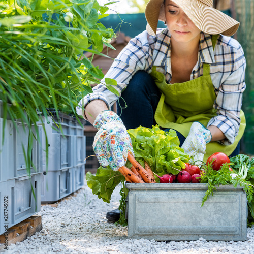Beautiful young female farmer with freshly harvested vegetables in her garden. Homegrown bio produce concept. Small business owner. Sustainable farm.