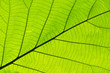 Closeup nature green leaf texture for abstract background