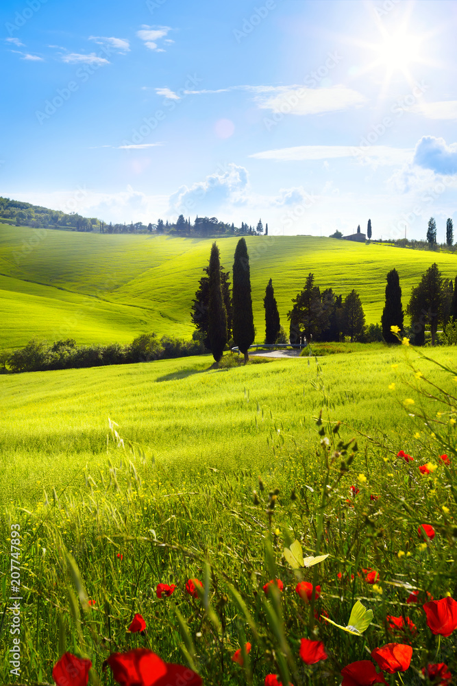 Fototapeta village in tuscany; Italy countryside landscape with red poppy flowers and Tuscany rolling hills ; sunset over the farm land