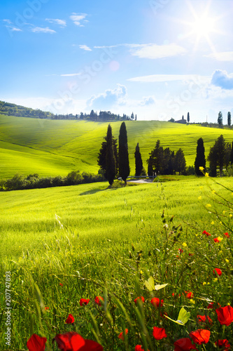 village in tuscany; Italy countryside landscape with red poppy flowers and Tuscany rolling hills ; sunset over the farm land
