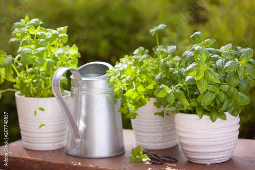 Papiers peints Condiment fresh basil parsley mint herbs in garden