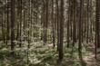canvas print picture - Sonne scheint auf Nadelbäume und setzt harte Schatten auf dem Waldboden.