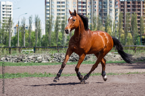 Photo  A horse in the warm season on a stable