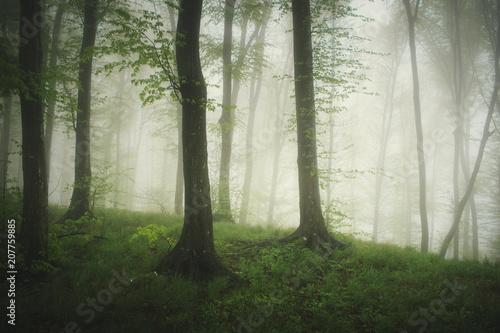 Keuken foto achterwand Olijf green woods with green foliage and lush vegetation