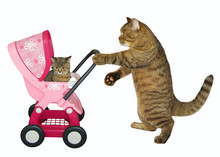 The Caring Cat Pushes A Pink P...