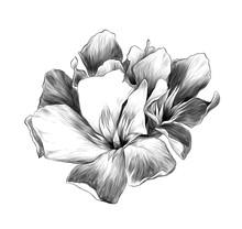A Bouquet Of Three Flower Buds...