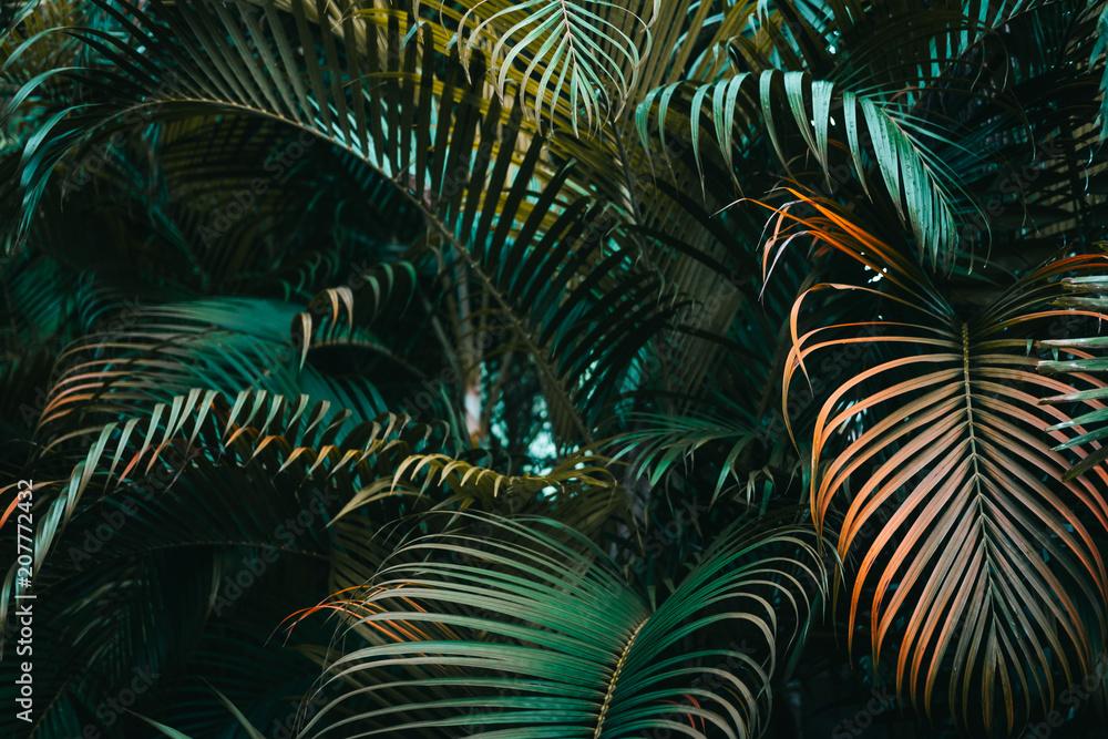 Fototapeta Deep dark green palm leaves pattern. Creative layout, horizontal