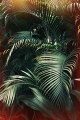 Fototapeta Do restauracji Deep dark green palm leaves pattern with bright orange sun flare effect. Creative layout, toned, vertical