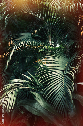 Deep dark green palm leaves pattern with bright orange sun flare effect. Creative layout, toned, vertical - 207772493
