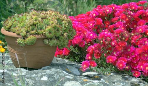 pot de succulentes,et fleurs ,décoration de jardin – kaufen Sie ...