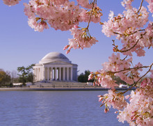 Jefferson Memorial During Cher...