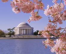 Jefferson Memorial During Cherry Blossom Festival In Washington, DC
