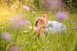 canvas print picture - Junges Mädchen liegt entspannt in Blumenwiese, Füße