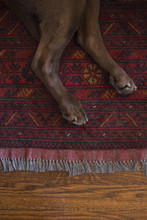 Dog Paws On Rug