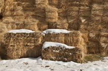Snow Covered Bales Of Hay On Farm In Uah