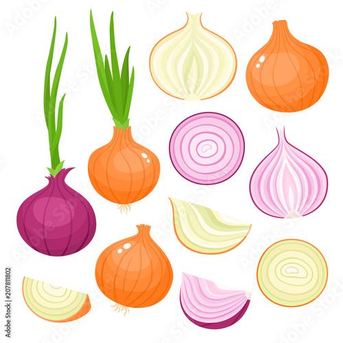 Fototapeta Vector set of cartoon red, yellow onion isolated on white obraz