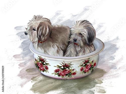 Cani, seduti in un catino di ceramica, decorato con rose Fototapet