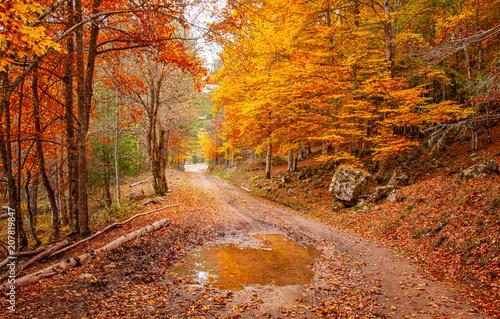 Foto op Aluminium Herfst Nice autumnal scene in the forest