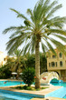 date palm near the pool on the territory of the hotel