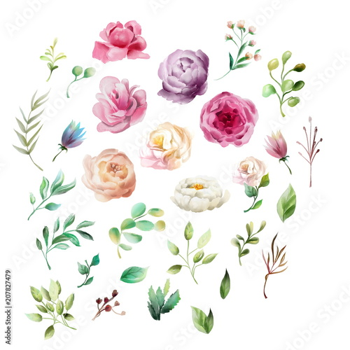 Beautiful, watercolor whimsical flowers. Violet, cream and white peonies, pink roses, leaves and branches, isolated on white