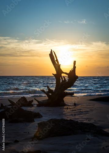 Photo Big Talbot Island's beautiful boneyard beach in Jacksonville, FL