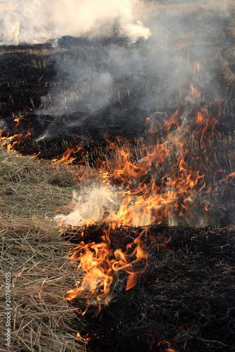 Fire burns rice straw until it is ash. Fotobehang