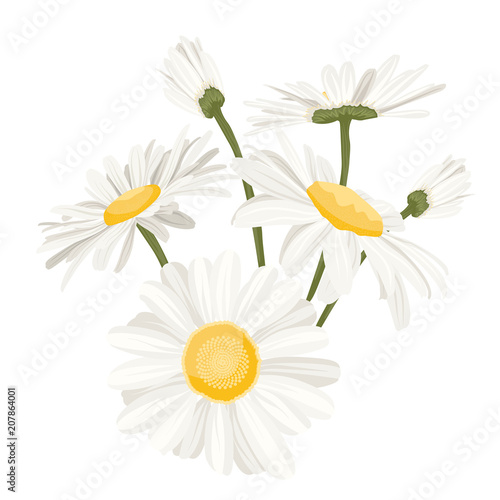 Isolated daisy chamomile close up view collection set Fototapeta