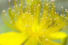 雄しべ 黄色い花
