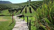 Beautiful Landscape Of The Golf Court In The Middle Of The Wineyard