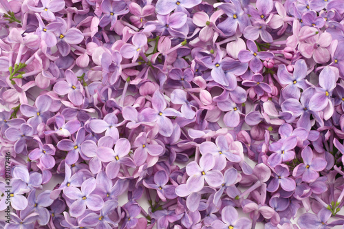 Foto op Canvas Lilac lilac flower background. lilac texture. top view