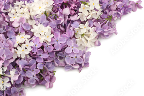 Keuken foto achterwand Lilac lilac flower isolated on white background. top view