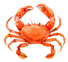 Crab Isolated On White Backgro...