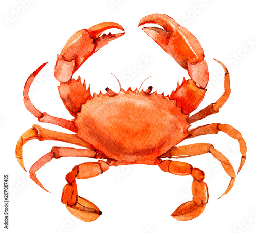 Photo  Crab isolated on white background, watercolor illustration
