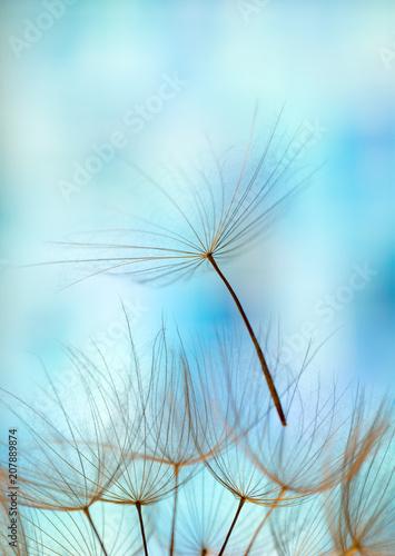 Foto op Aluminium Paardebloem dandelion seed background. Seed macro closeup. Spring nature