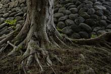 樹木と石垣