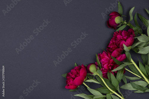 Peonies flowers on dark background with copy space.