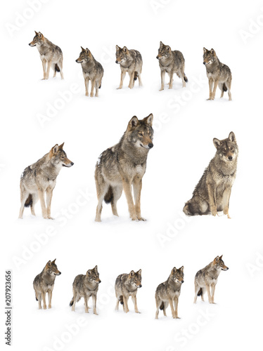Recess Fitting Wolf gray wolf