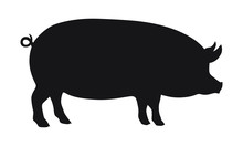 Pig Graphic Icon. Pig Black Silhouette Isolated On White Background. Vector Illustration