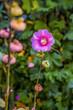 Fleur et rosée du matin dans le jardin