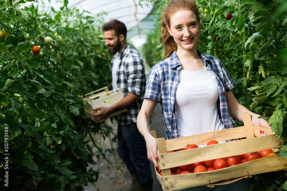 Fototapety, obrazy: Young couple of farmers working in greenhouse