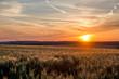 canvas print picture - Kornfeld bei Sonnenuntergang