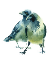 Watercolor Painting Birds. Ske...
