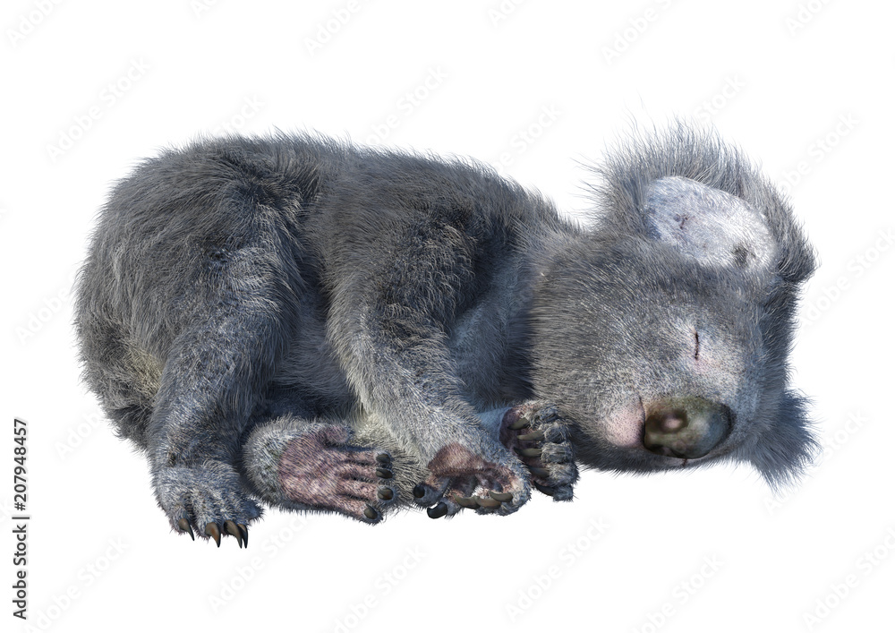 3D Rendering Koala Bear on White